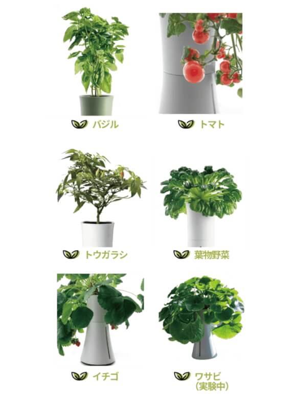 Botanium 育てられる植物