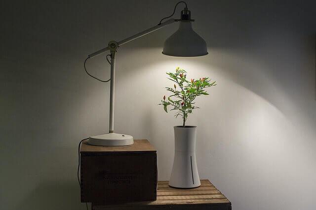 Botanium LED